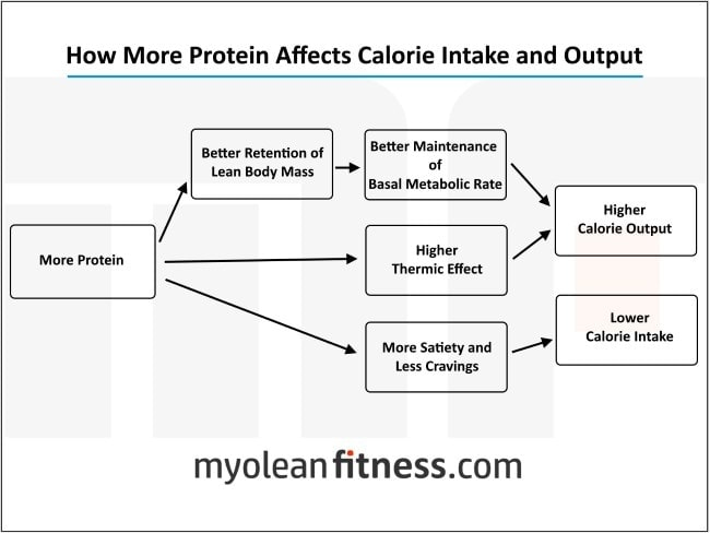 Low Carb Diets and Weight Loss - Myolean Fitness