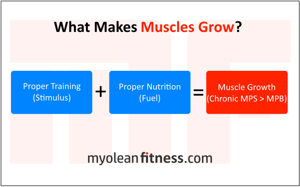 What makes muscles grow - Protein before bed - Myolean Fitness