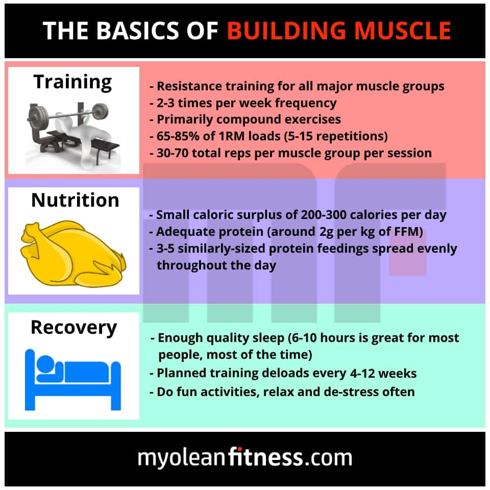 Basics of Building Muscle - Myolean Fitness