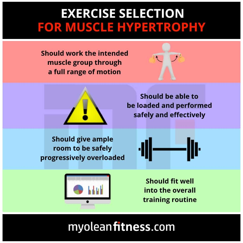 Exercise Selection for Building Muscle - Myolean Fitness Infographics